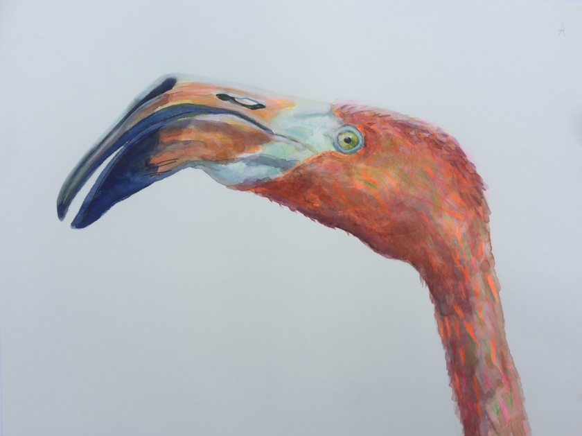 Flamingoportret.JPG