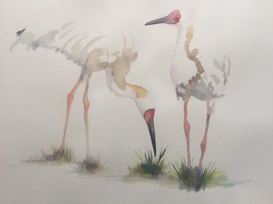 Siberische kraanvogels2jpg